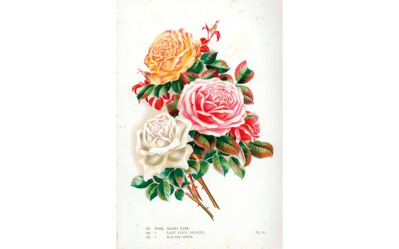 100年前のバラのカタログ