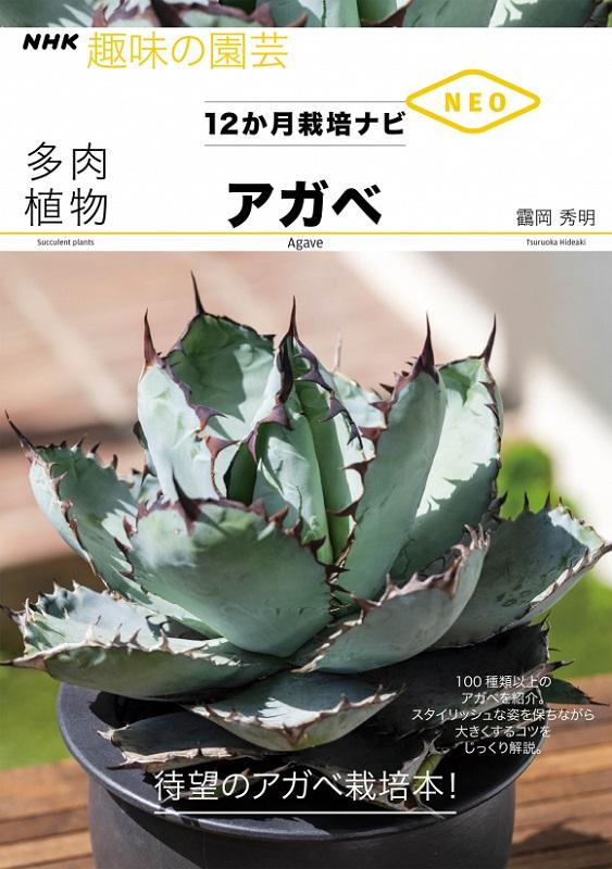 NHK趣味の園芸 12か月栽培ナビNEO 多肉植物 アガベ